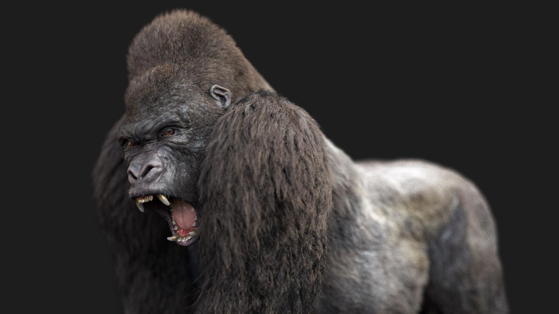Animation de cycle de marche de Gorille